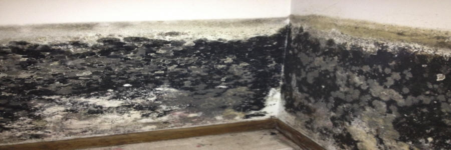 A picture of bathroom mold in a home.