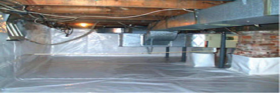 Mold Removal U0026 Remediation Services